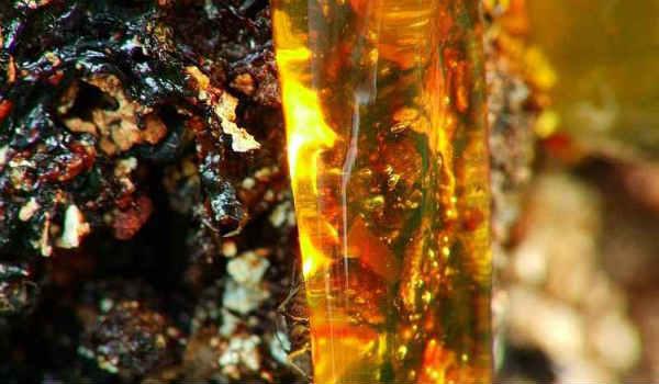 кедровая живица-лечебные свойства