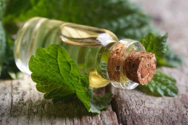 эфирное масло мелиссы-свойства применение