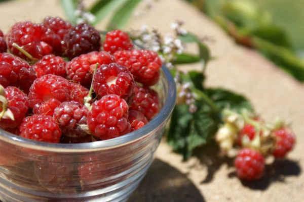 лечебные свойства малины-польза
