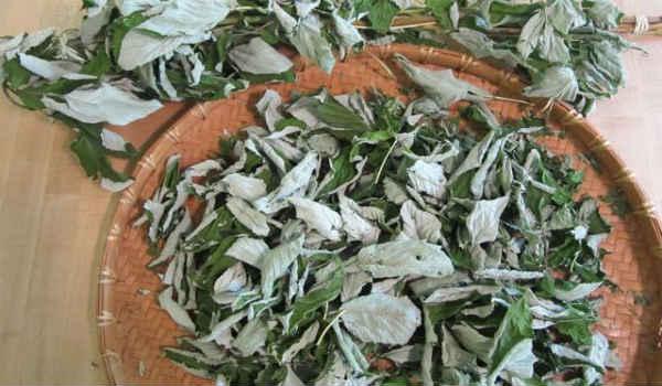 листья малины-применение