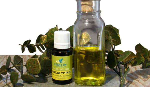 применение эфирного масла эвкалипта-для лечения