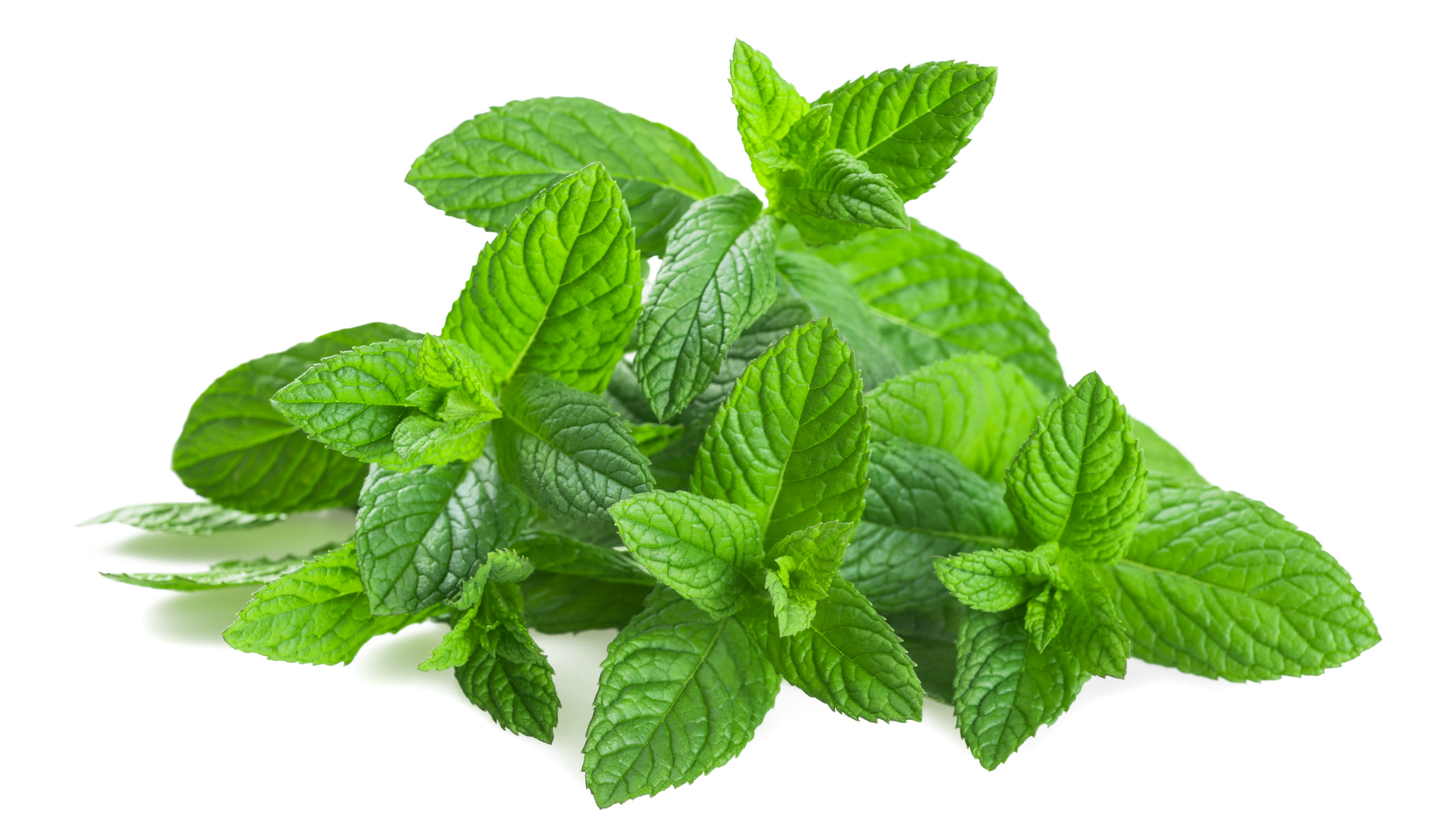 pepper mint Learn how to use essential oil of peppermint for digestive, immune support, and more.