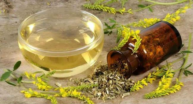 Донник лечебные свойства, противопоказания, применение, народные рецепты