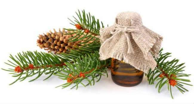 Эфирное масло сосны свойства и применение