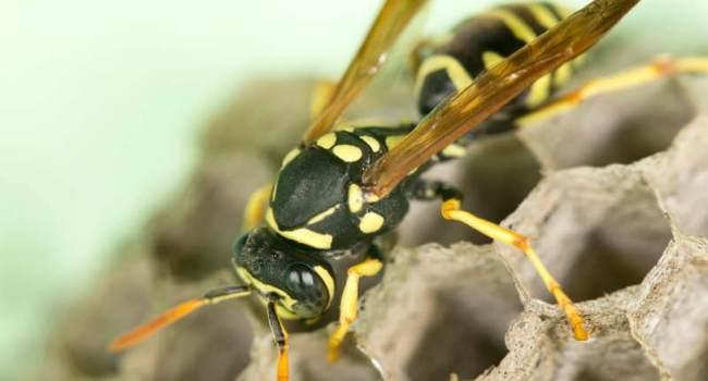 эфирные масла от насекомых-рецепты