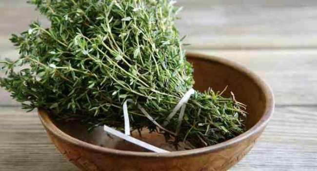 Тимьян лечебные свойства применение противопоказания