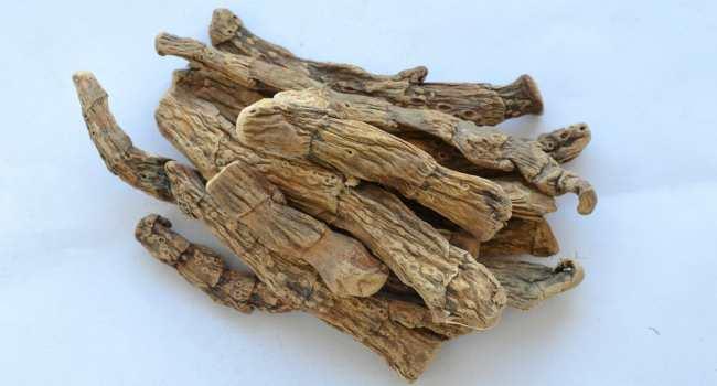 Аир болотный лечебные свойства применение противопоказания