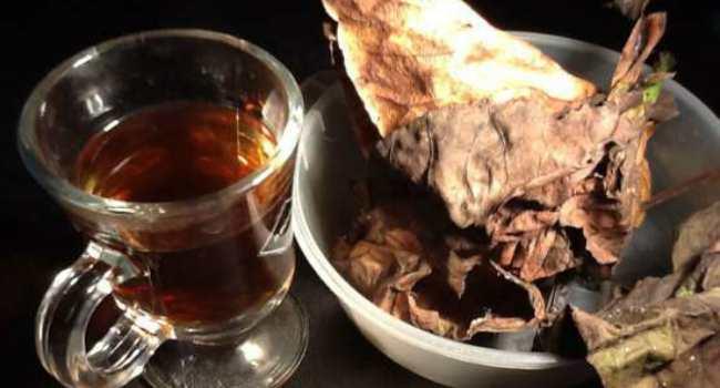чай из листьев бадана-свойства-как заваривать