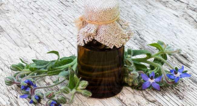 масло бораго-свойства-применение-как выбрать
