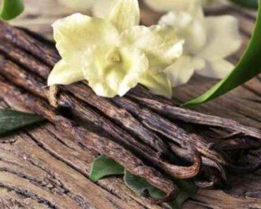 ваниль-свойства-польза для организма