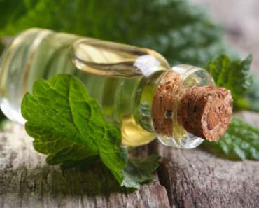 эфирное масло мелиссы-свойства и применение