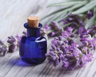 эфирное масло лаванды-свойства и применение