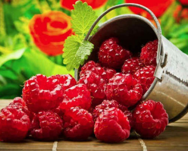 малина-лечебные свойства и противопоказания