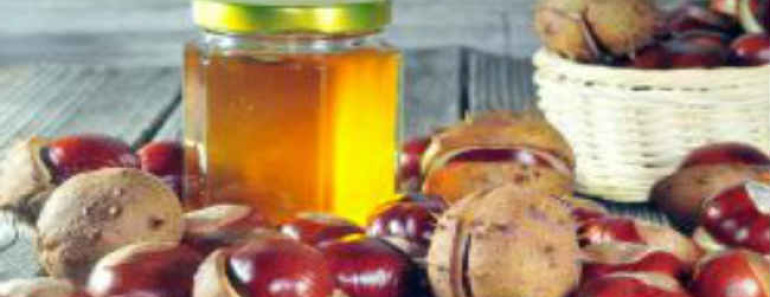 kashtanovyj-med-poleznye-svojstva