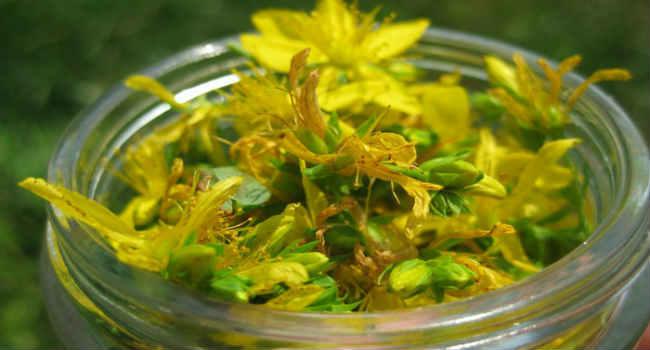 трава от аллергии кожи