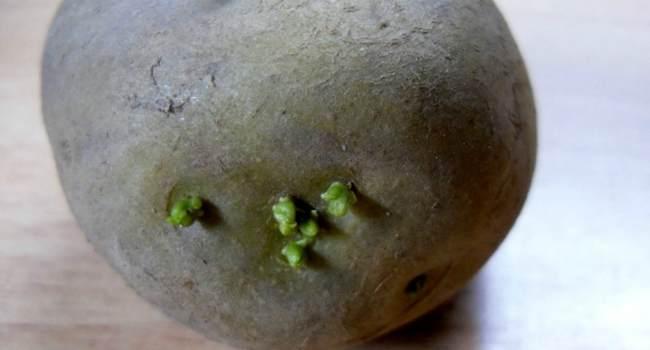 ростки картофеля-в народной медицине