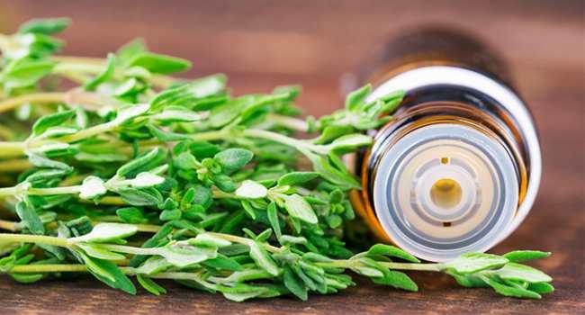 эфирное масло тимьяна-свойства