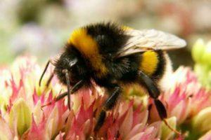 пчелиный яд-польза и вред