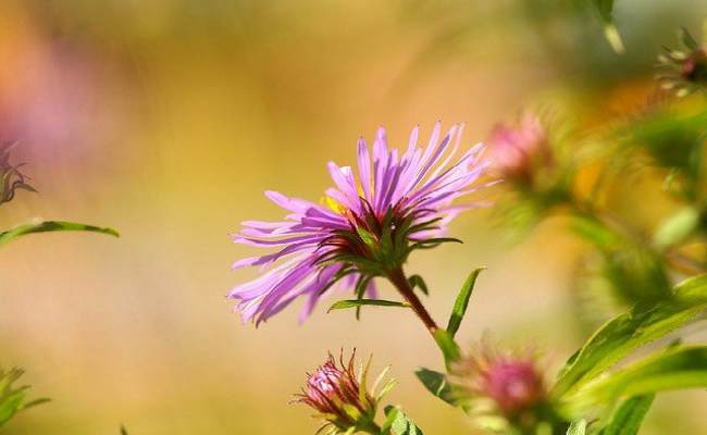 травы для щитовидной железы-какие травы лечат щитовидную железу